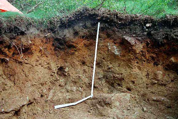 Illacrimate sepolture: curiosità e ricerca scientifica nella storia delle riesumazioni